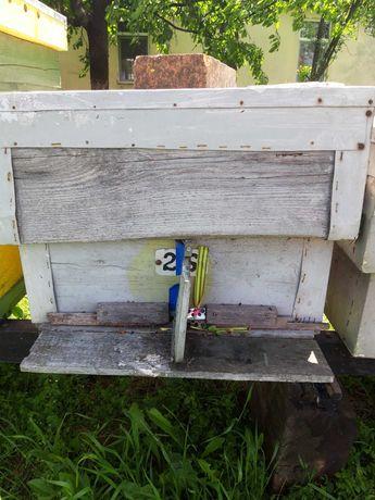 Vand lazi de albine pe 12 rame