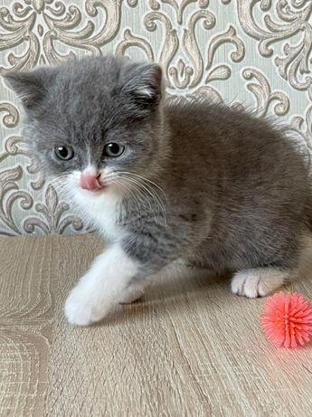 Котята чистокровные с отличной родословной