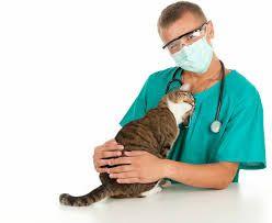 Ветеринар(Ветврач) на выезд