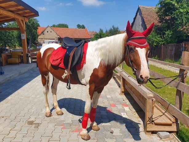 Cai ponei echitație