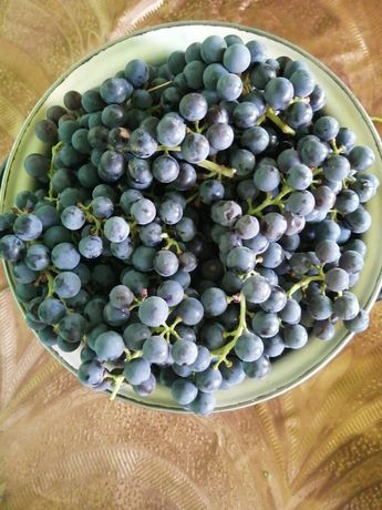 Продам виноград ,черный с доставкой