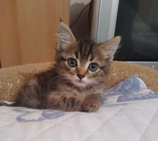 Котенок Тимон, в хорошие и добрые руки. Алматы