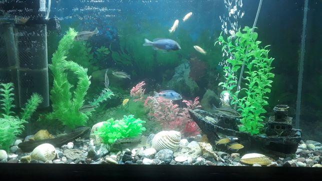 Продам Аквариум 200л полный комплект, с рыбками, декор и тд