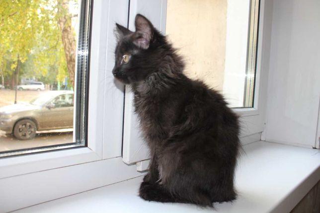 Отдадим ответственным людям 2-х месячную котенка-кошечку.