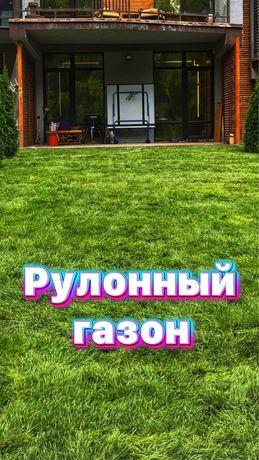 Посев и укладка газона,рулонный газон