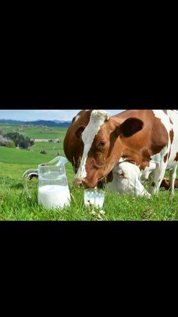 Молоко свежее коровье