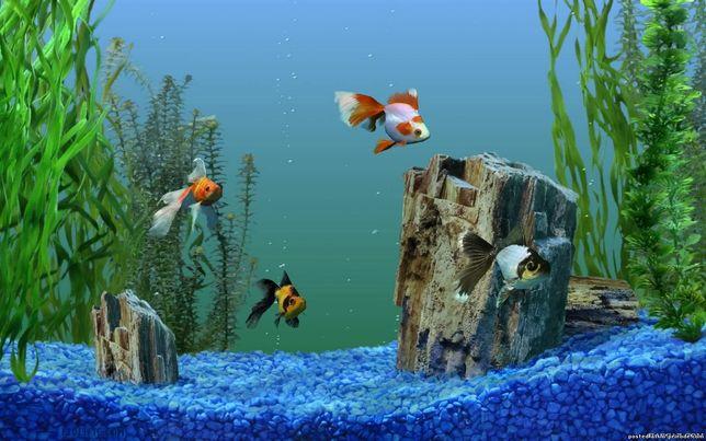 Обслуживание,изготовление аквариумов.