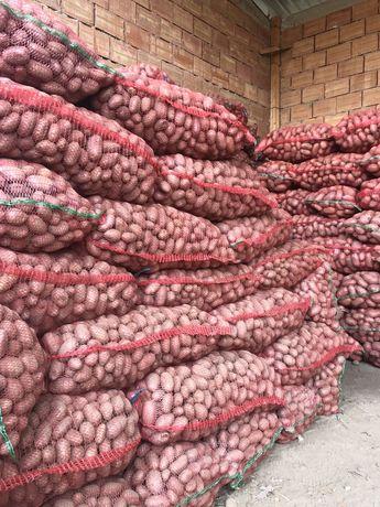 Cartofi samanta pentru animale