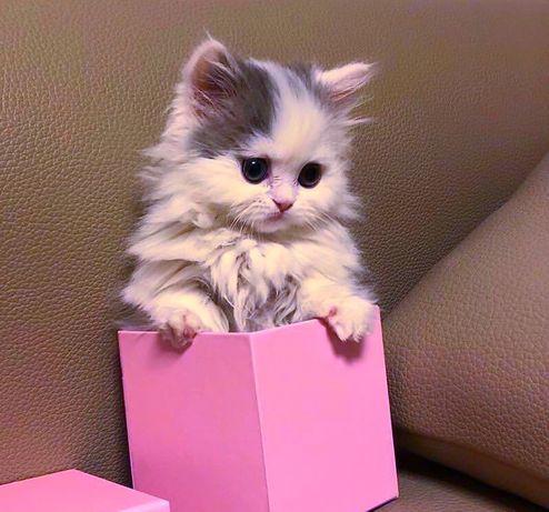 Чудесный ребёнок, сладкий котёнок