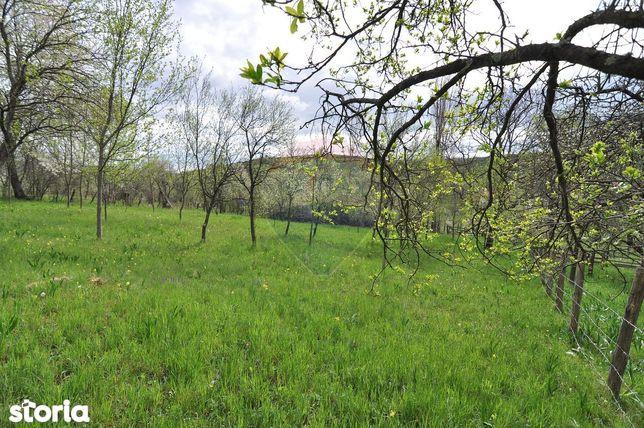 Teren-livada ideal pentru casa de vacanta | 39 km de Cluj-Napoca