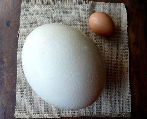 Черупки от щраусови яйца