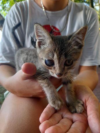 Бездомный котёнок, отдадим в хорошие руки. В подарок 1 китекет