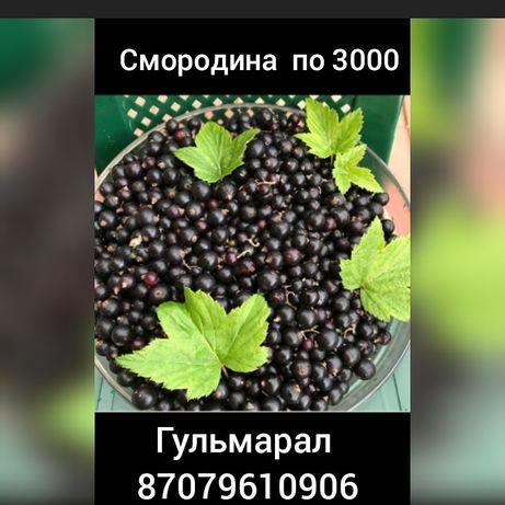 Смородина по адресу Крупская 38