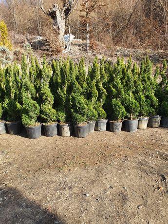 amenajam gradini cu plante gazon si copacii .din pepeniera propie .