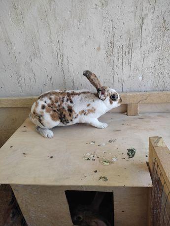 Продам кроликов триколор