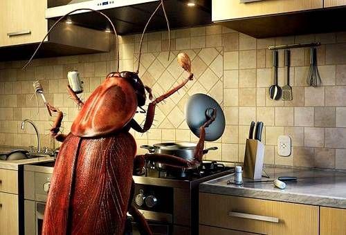 Средства от тараканов,клопов муравьев! большой выбор в Атырау