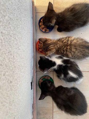 2 motanei si 2 pisicute pentru adoptie