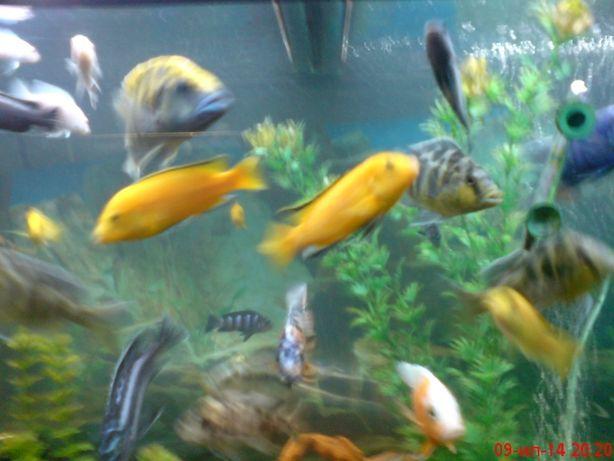 чистка аквариумов ,рыбки ,корма