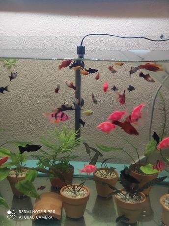 Pesti de acvariu