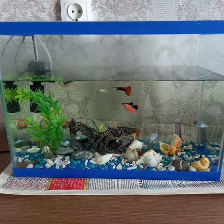 Продам аквариум на 20 лит