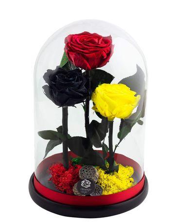 Cupolă XXL 30 cm trandafiri criogenati