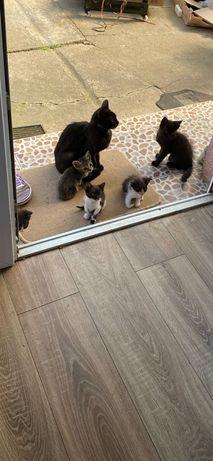 Donez pisici de 3 luni
