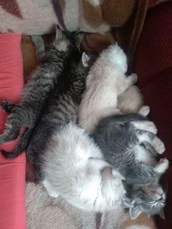 Котята отдам котят