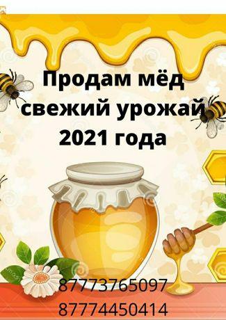 Продам мёд свежий урожай 2021 года (донник, разнотравие)