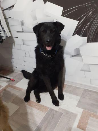 Собакин в хорошие руки