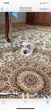 Продам ковёр для зала