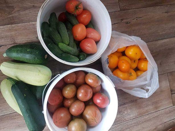 Домашние  помидоры и огурцы .