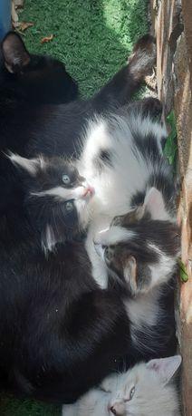 Отдам двоих котят в добрые руки