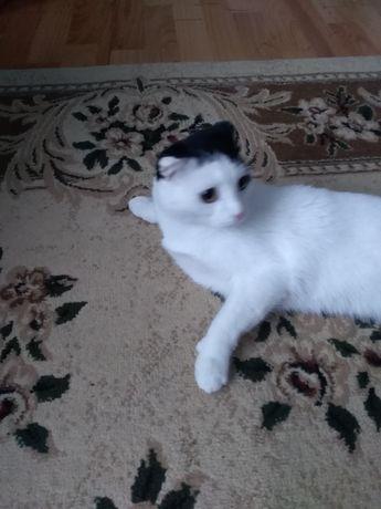 Нужен кот для вязки