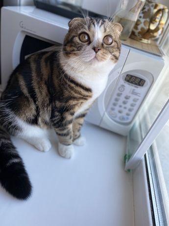 Кот ищет кошечку