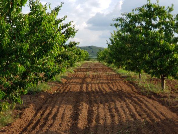 Овощна градина -череши, 16 декара
