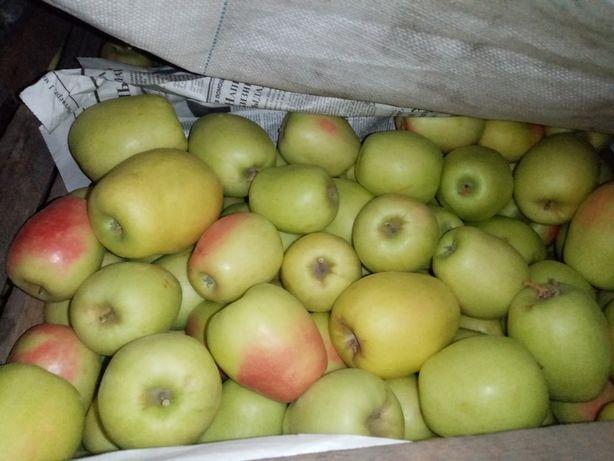 """Продам яблоки сорт """"Восход"""" 250тг."""