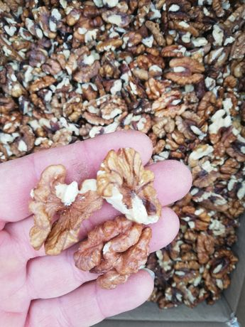 Орехови ядки нова рвколта.