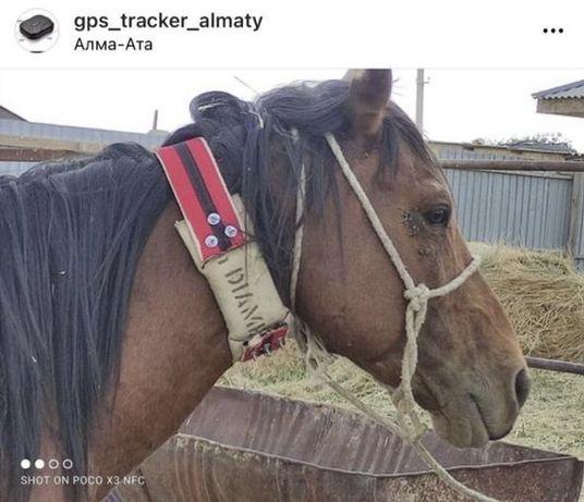 GPS трекер малга