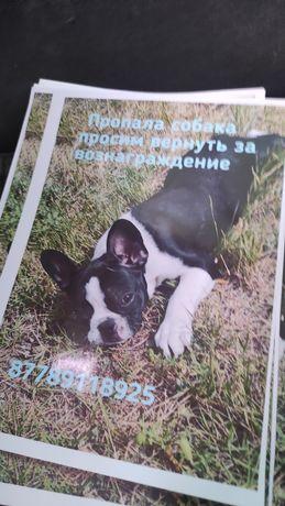 Пропала собака верните пожалуйста за вознаграждение