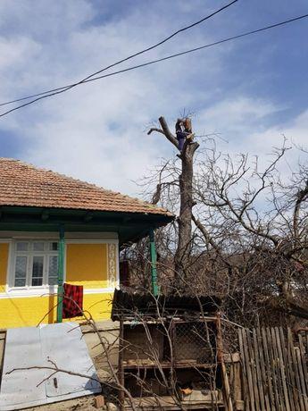 Dobor copaci periculosi cu drujbe profesionale