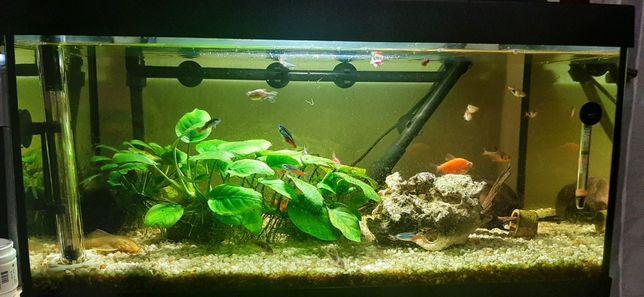 vand acvariu cu 7 specii de pești