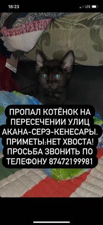 Пропал котик чёрного цвета