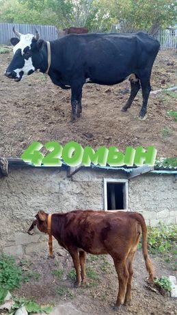 продаю скот на мясо