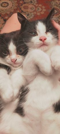 Котята-мышеловы.