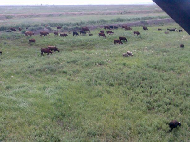 Кх, крестьянское хозяйство, ферма, хозяйство, крс, лошади