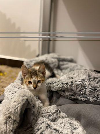 Pisicuta spre adopție