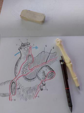 Caiet mapa dosar desene anatomie medicina