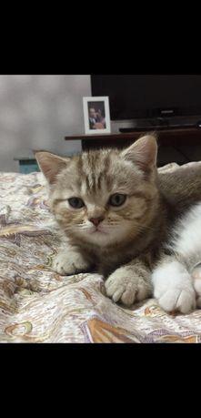 Котенок мальчик ищет дом