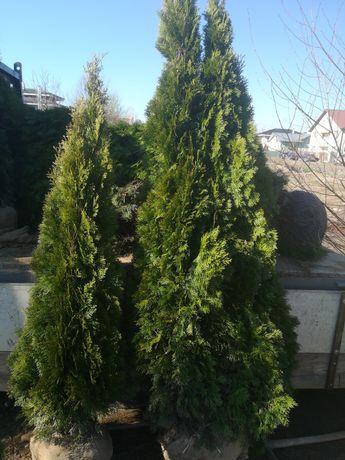 Plante ornamentale pentru gradina dvs. Diferite specii si dimensiuni