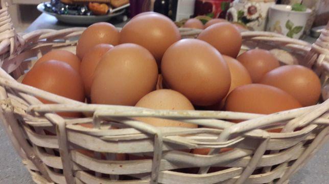 Инкубационное яйцо домашних помесных кур.
